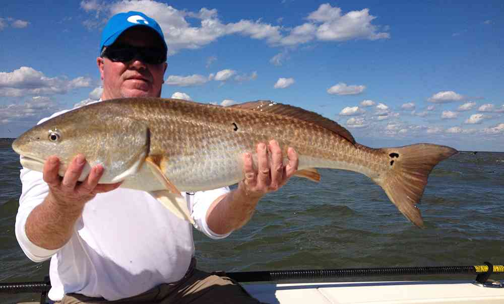 georgetown-redfish-chev2