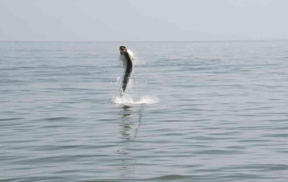 gerogetown-tarpon-fishing-002