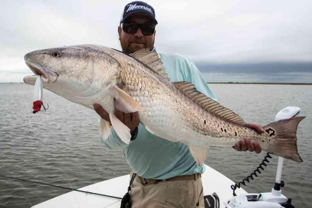 Topwater-Redfish-NW-Georgetown