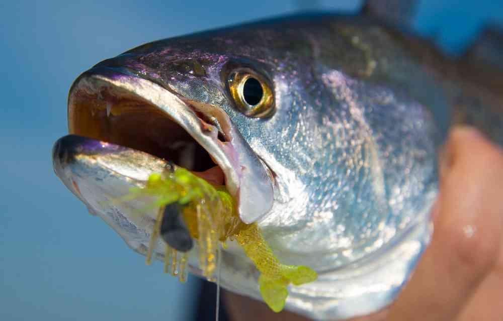Vudu-Shrimp-Close-Up