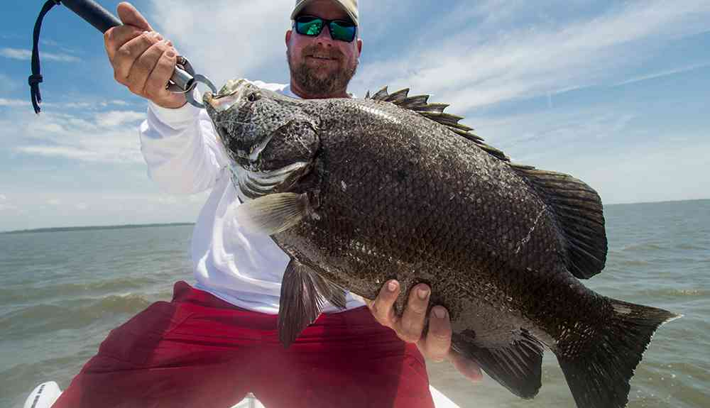 Mid summer fishing report carolina guide service fishing for Murrells inlet fishing report