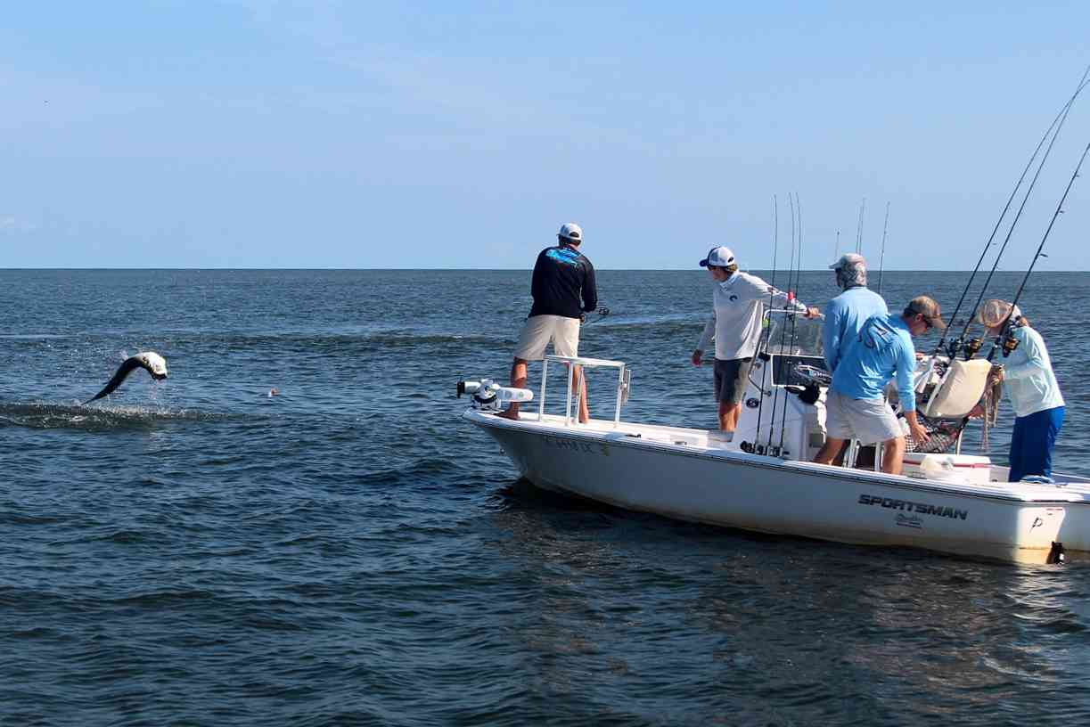 Tarpon Tagging in South Carolina