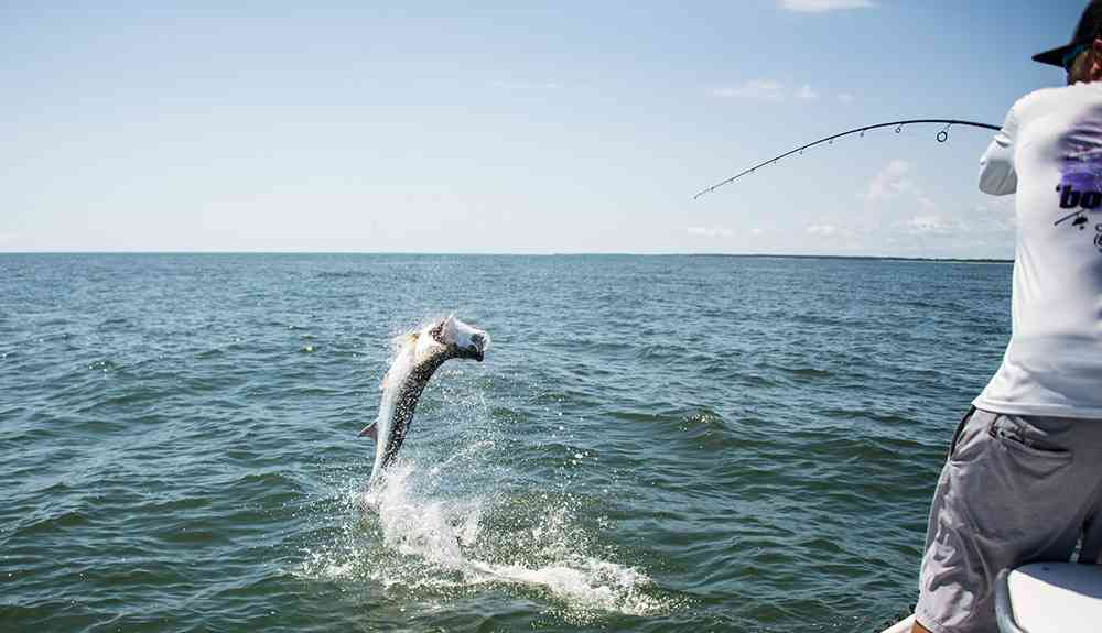 tarpon fishing south carolina