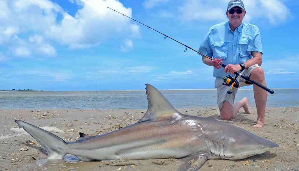a picture of Shark Fishing Charters with Carolina Guide Service